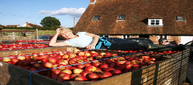 Kent Cider apple boxes, annie cap, andy maclean